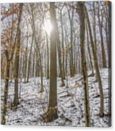 Sun Peaking Through The Trees - Fairmount Park Acrylic Print