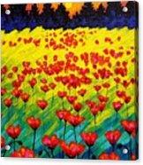 Sun Poppies Acrylic Print