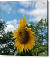 Sun Power Acrylic Print