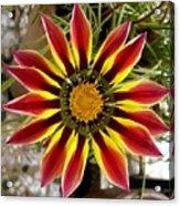 Sun Ray Flower Acrylic Print