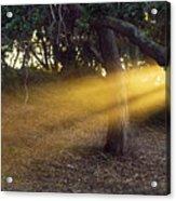 Sun Rays 2 Acrylic Print