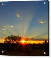 Sun Rays At Sunset With Tree And Saguaro Acrylic Print
