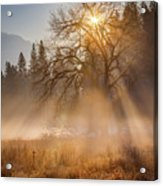 Sun Rays In Yosemite Ground Fog Acrylic Print