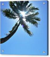 Sun Rays Through A Tall Palm Tree Acrylic Print