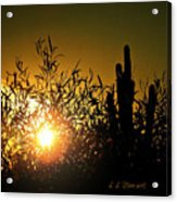 Sun Shining Acrylic Print