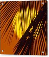 Sun Shining Through Palms Acrylic Print