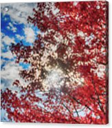 Sun Sky Clouds And A Red Maple Acrylic Print