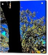Sun Through Oak V3 Acrylic Print
