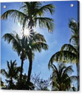 Sun Through Smathers Beach Palms Acrylic Print