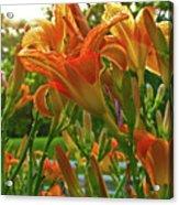 Sun Through The Tiger Lily Acrylic Print