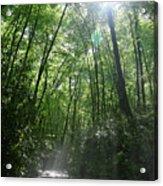 Sun Through The Trees Acrylic Print