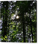 Sun Through Trees In Forest Acrylic Print