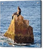 Sunbathing Sea Lion Acrylic Print