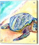 Sunbathing Turtle Acrylic Print