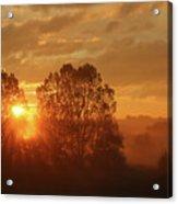 Sunbeam Through Cottonwoods Acrylic Print