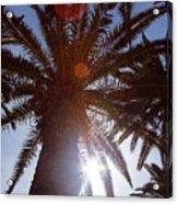 Sunbeams Through The Palms Acrylic Print