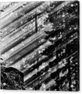 Sunbeams Through The Pines - Mount Rainier Acrylic Print