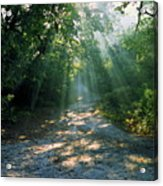 Sunbeams Through Trees Acrylic Print