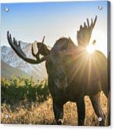Sunburst In The Antlers Acrylic Print