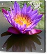 Sunburst Lily Acrylic Print