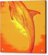Sunburst Porpoise Acrylic Print