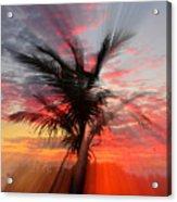 Sunburst Through Palm Tree Acrylic Print