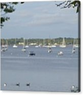 Sunday Morning Swim On Manhasset Bay In Port Washington, Ny Acrylic Print