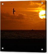 Sundown Flight Acrylic Print
