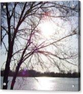 Sundown In Tree Acrylic Print