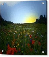 Sundown Wildflower Meadow Acrylic Print