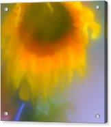 Sunflower # 5. Acrylic Print