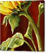 Sunflower - Sunny Side Up Acrylic Print