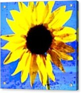 Sunflower 12 Acrylic Print