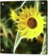 Sunflower-5030-fractal Acrylic Print