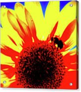 Sunflower Abstract Acrylic Print