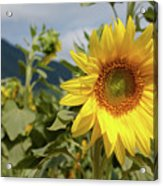 Sunflower And Peaks Of Otter Acrylic Print