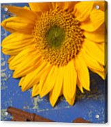 Sunflower And Skeleton Key Acrylic Print by Garry Gay