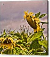 Sunflower Art 2 Acrylic Print