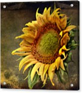 Sunflower Art 2 Acrylic Print