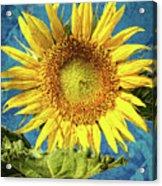 Sunflower Art Acrylic Print