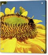 Sunflower Art Prints Honey Bee Sun Flower Floral Garden Acrylic Print