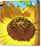 Sunflower Art Prints Orange Yellow Floral Garden Baslee Troutman Acrylic Print