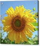 Sunflower Art Prints Sun Flower 2 Giclee Prints Baslee Troutman Acrylic Print