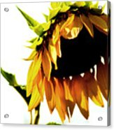 Sunflower Art Acrylic Print