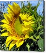 Sunflower By Design Acrylic Print