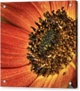 Sunflower Dance Acrylic Print