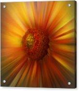 Sunflower Dawn Zoom Acrylic Print