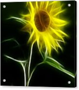 Sunflower Display Acrylic Print