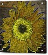 Sunflower Dreaming Acrylic Print