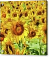 Sunflower Edges Acrylic Print